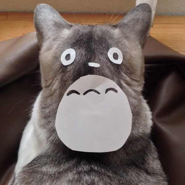 totoro-cat